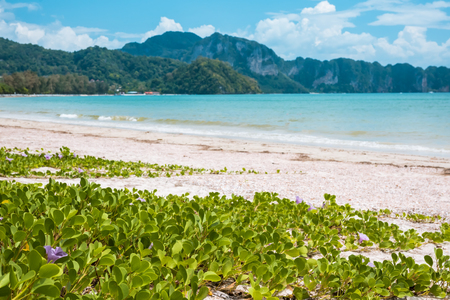aonang: Paradise Ao Nang beach. Sea and plant, Krabi Thailand