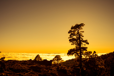 Sunset over clouds with Canary pine, Tenerife island Stock Photo