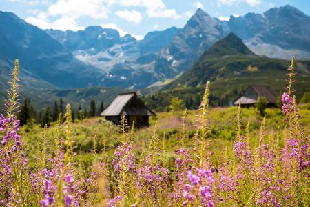 Summer view to Hala Gasienicowa in valley, Tatra mountains Zakopane Poland