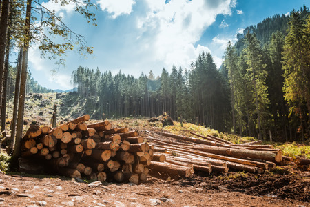 Log stacks along the forest road, Tatry, Poland, Europe Stockfoto