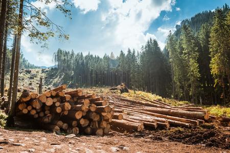 Stosy kłód wzdłuż drogi leśnej, Tatry, Polska, Europa