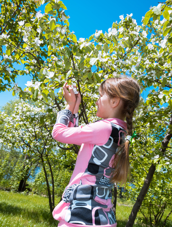 Small girl sniffs blooming apple flowers in orchard Stock Photo