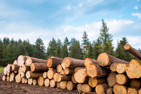 Log stacks along the forest road, Tatry, Poland, Europe Stock Photo