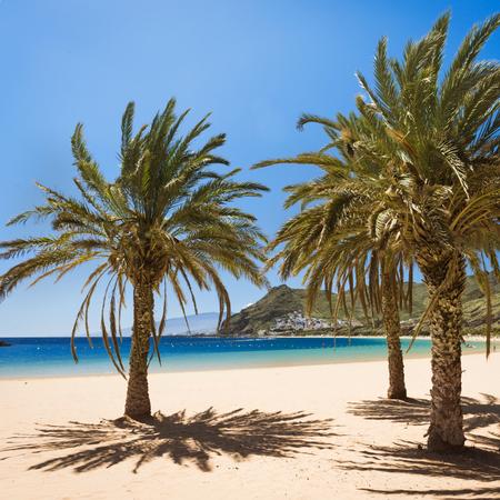 palm trees on Playa de las Teresitas Beach, Tenerife
