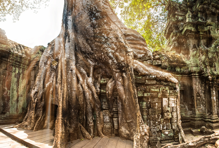 Giant tree and roots in temple Ta Prom Angkor wat Cambodia landmark 版權商用圖片