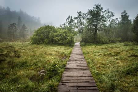 Swamp wooden path walkway to Trolltunga, Norway