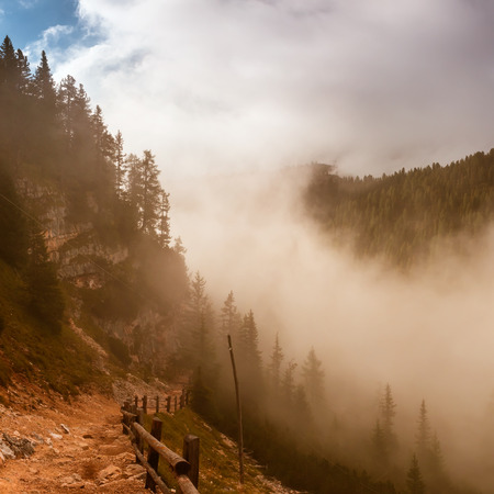 beautiful mystical pine forest and sunbeams, Dolomites Alps, Italy