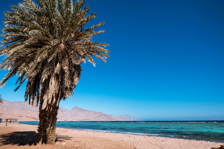 Coast of the Red Sea, in Gulf of Aqaba, near Dahab.Egypt 免版税图像