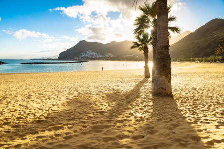 Warm sand and palm trees on Playa de las Teresitas Beach, Tenerife Stock Photo
