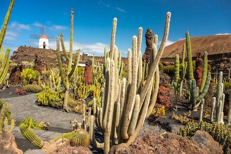 Tropical cactus garden in Guatiza village, Lanzarote, Canary Islands, Spain Imagens