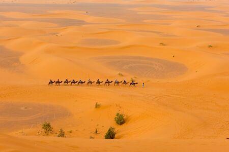 Tourist camel caravan in Sahara desert Merzouga, Morocco