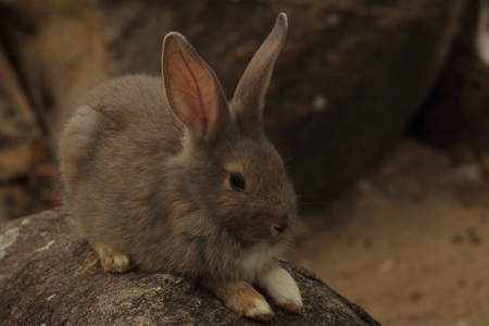 whether: Thailand native bunny rabbit is fed by the common folk. It is unclear whether any of the species. Many colors are found.