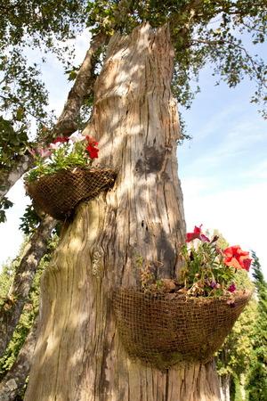 Gardening arrangement