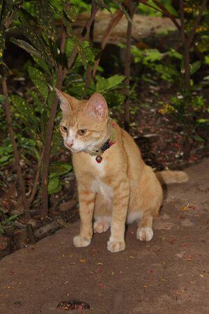 Cute little tiger cats Reklamní fotografie