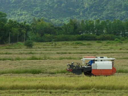 Combine harvesters are working in the rice fields of Thailand.