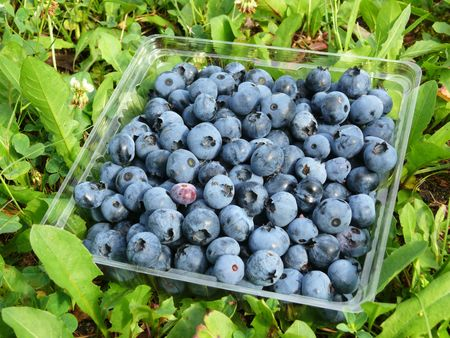 Raw blueberries in a basket Stock Photo - 6674456