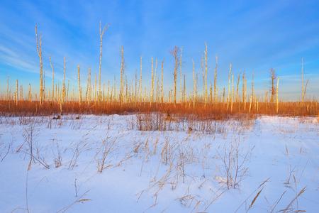 deadwood: Sunset evening winter landscape, view of the deadwood.