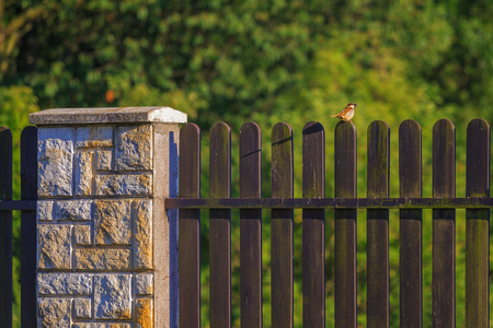 flew: A Sparrow flew in and sat on the fence.