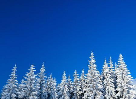 monta�as nevadas: Bosque de invierno  Foto de archivo