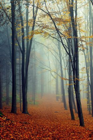 Autumn landscape in foggy wood with a track Archivio Fotografico