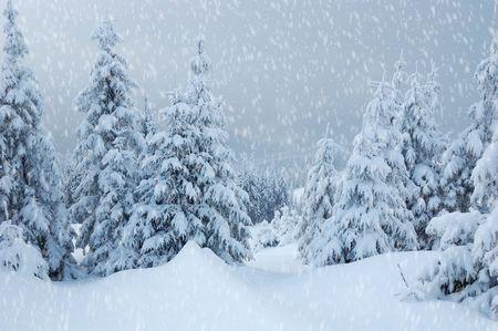 Winter landscape with snow in mountains Carpathians, Ukraine photo