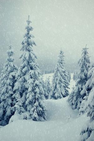 bosque con nieve: Paisaje de invierno con la nieve en los Montes C�rpatos, Ucrania Foto de archivo