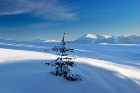 Winter landscape with snow in mountains Carpathians, Ukraine Stock Photo - 8247490