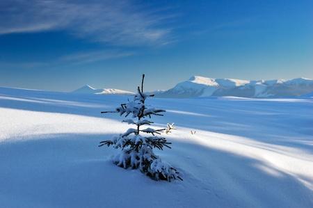 Winterlandschaft mit Schnee im Gebirge Karpaten, Ukraine