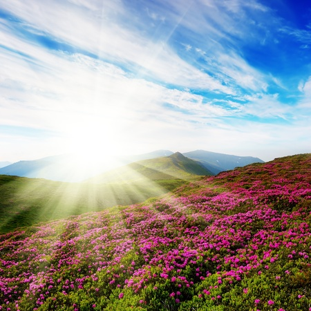 Spring landscape in mountains with colors of a rhododendron and the sky with clouds