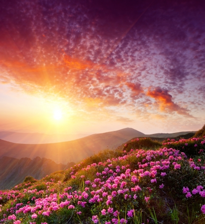 red morning: Spring landscape in mountains with Flower of a rhododendron and the sky with cloud Stock Photo