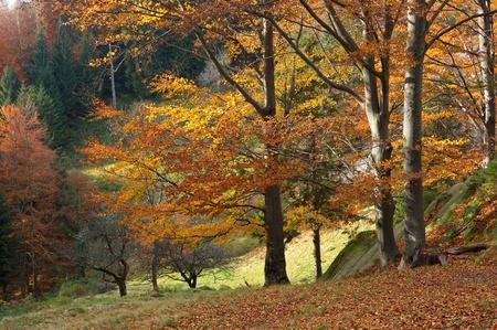 Autumn landscape with bright trees in mountains Carpathians, Ukraine Stock fotó