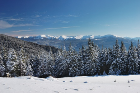 Winter landscape with fur-trees and fresh snow. Ukraine, Carpathians Stock Photo - 10910505