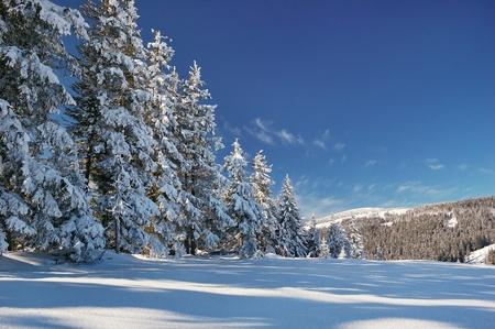 Winter landscape with fur-trees and fresh snow. Ukraine, Carpathians Stock Photo - 10910507