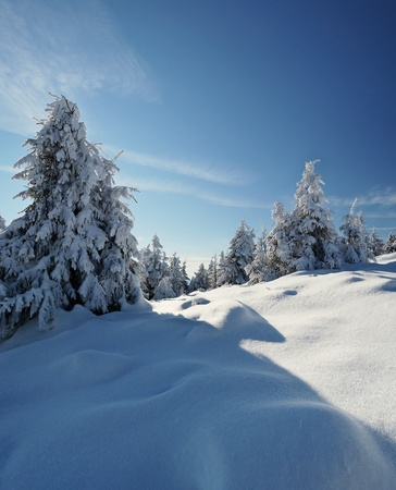 Winter landscape with fur-trees and fresh snow. Ukraine, Carpathians Stock Photo - 10910510