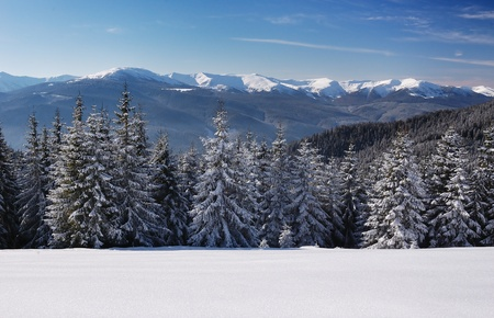 Winter landscape with fur-trees and fresh snow. Ukraine, Carpathians Stock Photo - 10910501