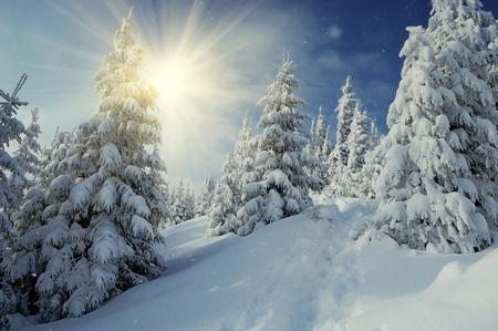 bosque con nieve: Paisaje de invierno en una puesta de sol. Montes C�rpatos, Ucrania  Foto de archivo