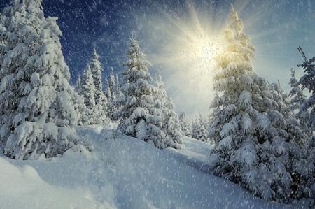 Paysage d'hiver sur un coucher de soleil. Carpates, en Ukraine Banque d'images