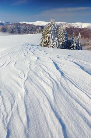 Winter landscape with fur-trees and fresh snow. Ukraine, Carpathians Stock Photo - 10910521