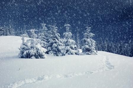 Winter landscape in mountains. Carpathians Ukraine photo