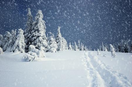 Paisaje de invierno con pieles de árboles y la nieve fresca. Ucrania, los Cárpatos