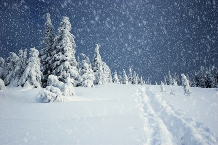 montañas nevadas: Paisaje de invierno con pieles de árboles y la nieve fresca. Ucrania, los Cárpatos Foto de archivo