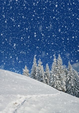 Winter landscape with fur-trees and fresh snow. Ukraine, Carpathians Stock Photo - 11158483