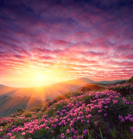 red sunset: Spring landscape in mountains with Flower of a rhododendron and the sky with cloud Stock Photo