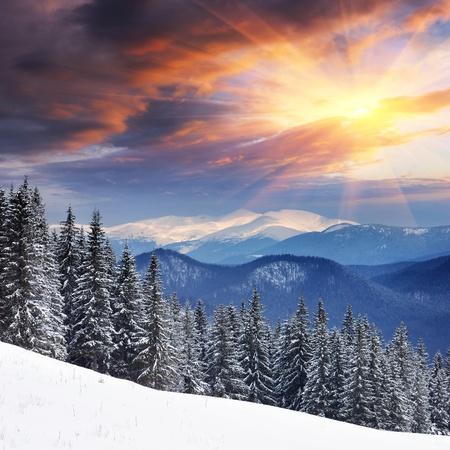 Paesaggio invernale con pelliccia di alberi e neve fresca. Ucraina, Carpazi Archivio Fotografico - 12654879