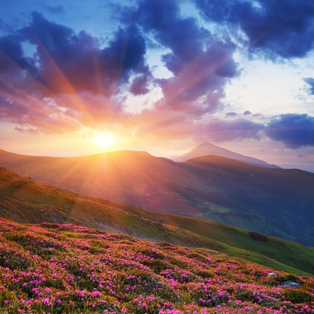 Spring landscape in mountains with Flower of a rhododendron and the sky with cloud Stock fotó