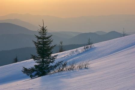 sunsets: Winter landscape on a sunset. Mountains Carpathians, Ukraine  Stock Photo