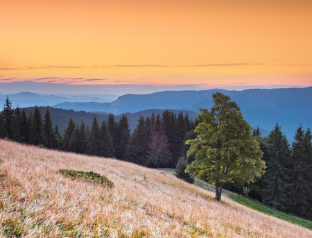 Landscape in the mountains with a sunset. Ukraine, the Carpathian mountains photo