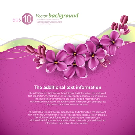 purple lilac: Spring background for the design of flowers  Vector illustration