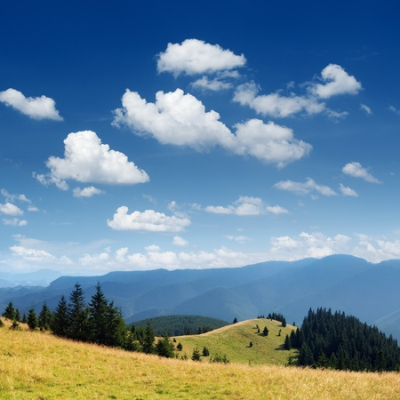 Summer landscape in mountains A mountain valley with pines\ and the blue sky
