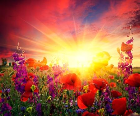 rayos de sol: Paisaje de verano con un campo de amapolas rojas en flor Foto de archivo